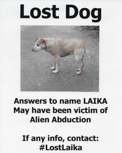 lost dog poster